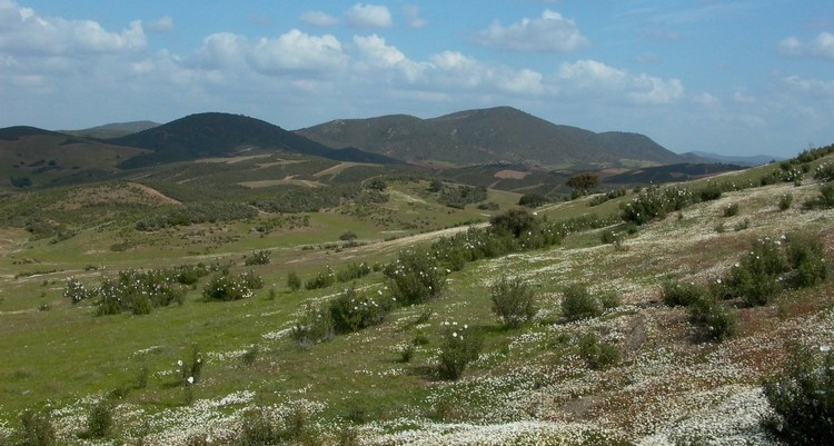 Parque Natural Vale do Guadiana - hilly steppic habitats in March
